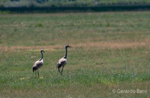 us_br_lk_Sanchill crane