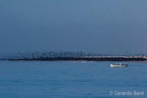 010-Swakopmund-Cape cormorants
