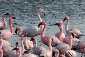 010-Swakopmund-Flamingoes