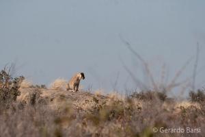 05-Olifant-Lion