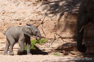 06-Khowarib-Desert elephant1