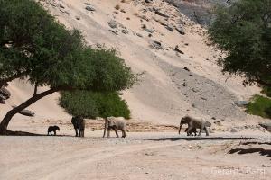 06-Khowarib-Desert elephant3