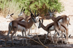 06-Khowarib-Springboks
