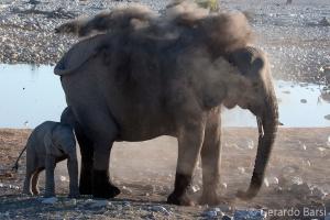 4-Okaukuejo-Plain elephant1